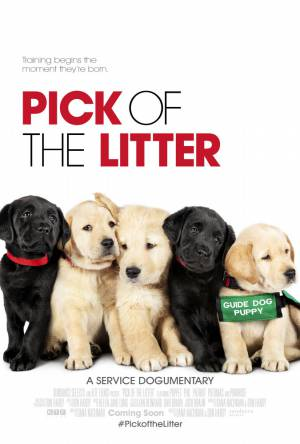 Выбор щенка / Pick of the Litter